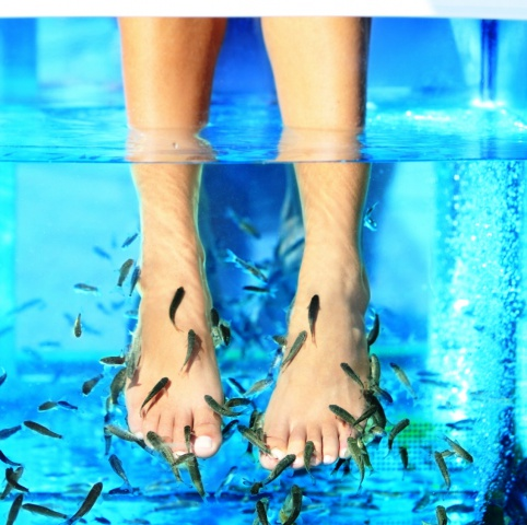 Wellness area – fish pedicure - Hotel Flóra - Eger